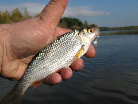 Кошерная рыба - есть можно!