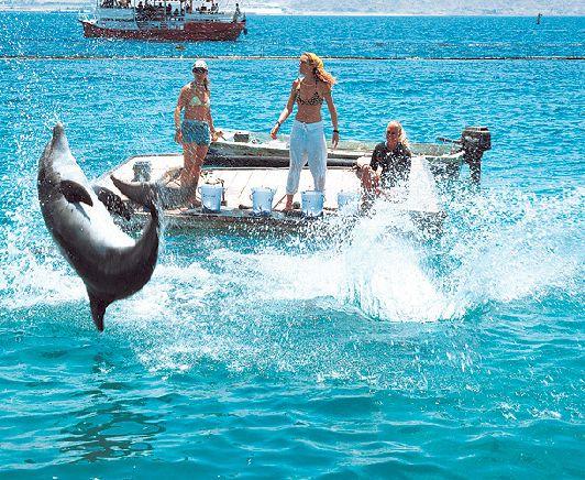 ''Дельфиний риф'' в Эйлате - излюбленное место детворы