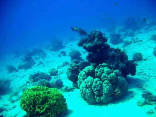 Кораллы на глубине 15 м в Красном море