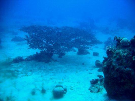 Кораллы на глубине 30 м в районе заповедника