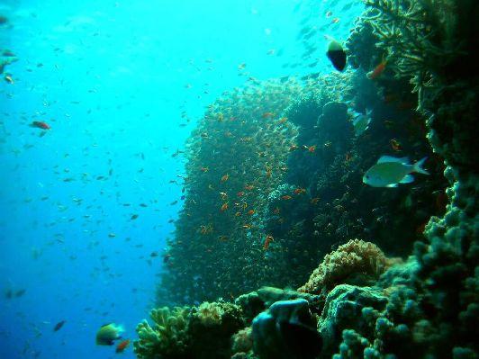 Морские обитатели Красного моря здесь как на ладони
