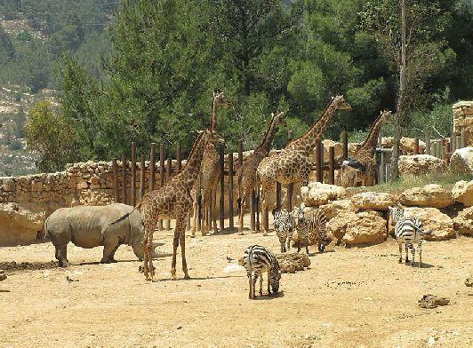 Зоопарк был основан на пожертвования семьи Тиш из Нью-Йорка, поэтому второе его название - зоосад семьи Тиш