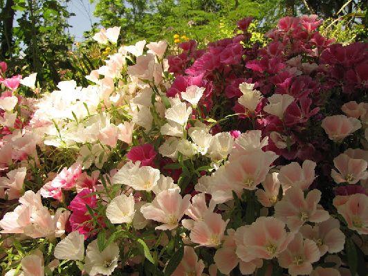 В ботаническом саду представлена большие коллекции растений со всего Израиля, а так же  других стран мира