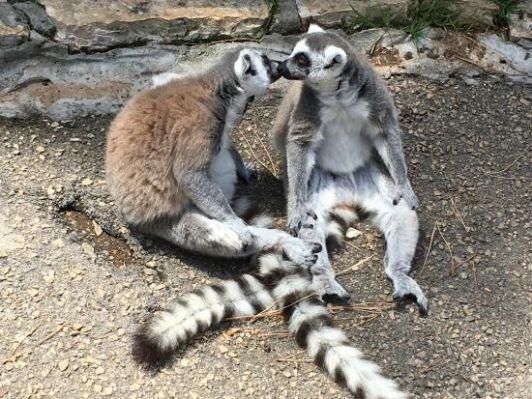 В некоторые вольеры зоопарка можно зайти