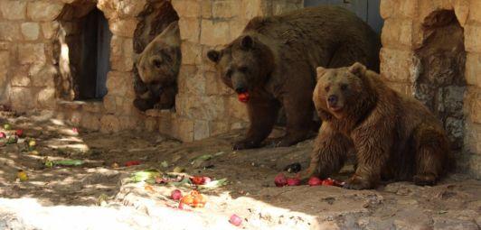 В зоопарке Гольдшмидта животные содержаться в хороших условиях и любоваться на них одно удовольствие