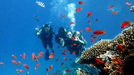 Дно Красного моря одно из самых красивых в мире