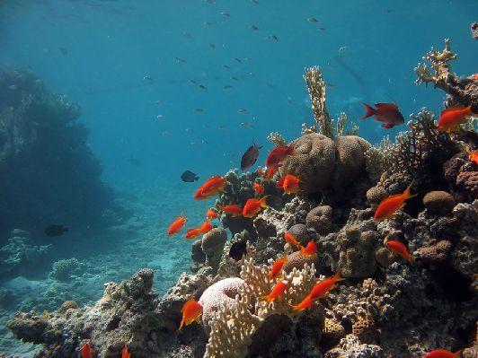 В Эйлате изумительно красивое море - излюбленное место для дайверов