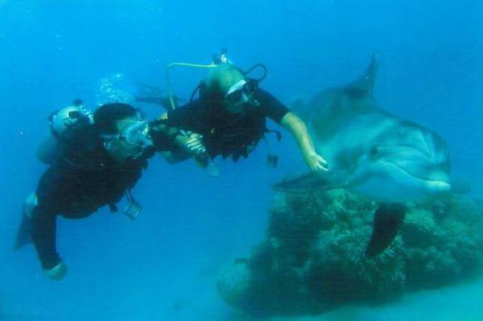На пляже Дельфиний риф вы можете поплавать в одной воде с дельфинами