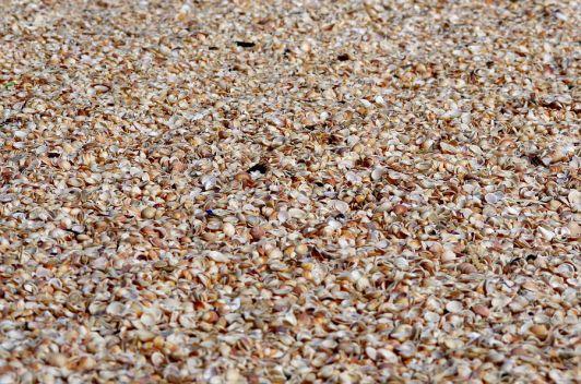 На пляже Абоним есть места усыпанные ракушками